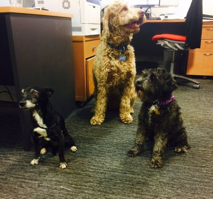 dogs in the office